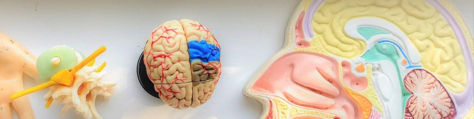neuropraxis-lilienfein / Eberswalde